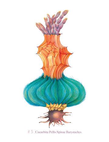 nr-05-Cucurbita-Pellis-Spinae-Barystachy