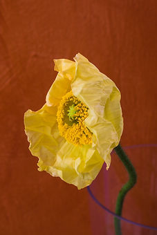 banksia en papaver JPEG-3243.jpg