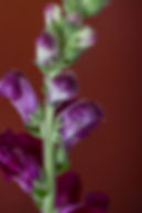 donkere bloemen serie jpg-242.jpg