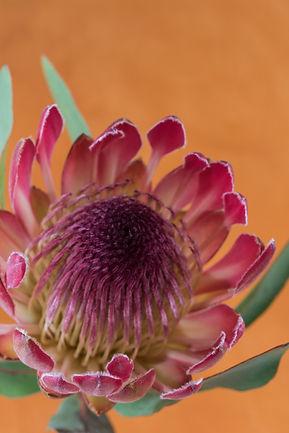 banksia en papaver JPEG-3453.jpg