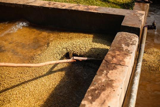 Gafisse Being Washed 2-min.jpg