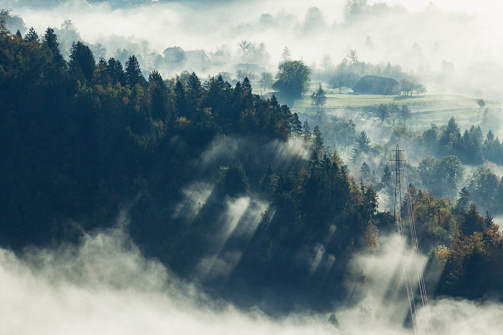 aerial-shot-beautiful-tree-forest-covered-with-fog-bled-slovenia.jpg