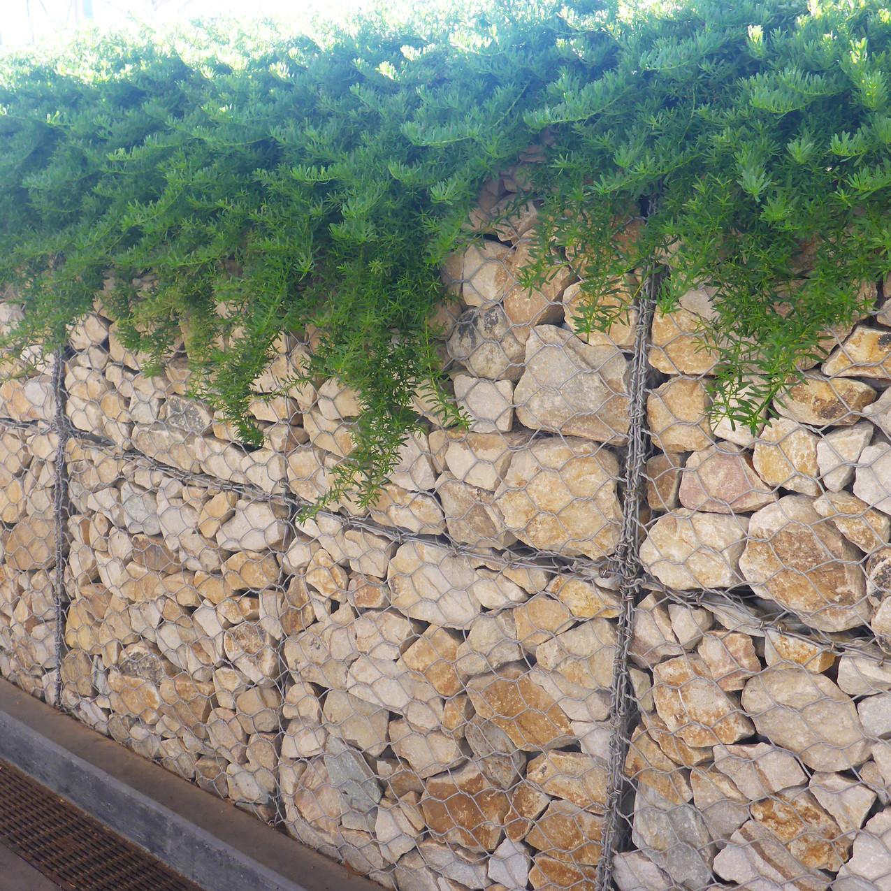 Wayville Train Station Gabion Wall