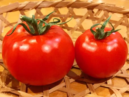 トマト初収穫!!