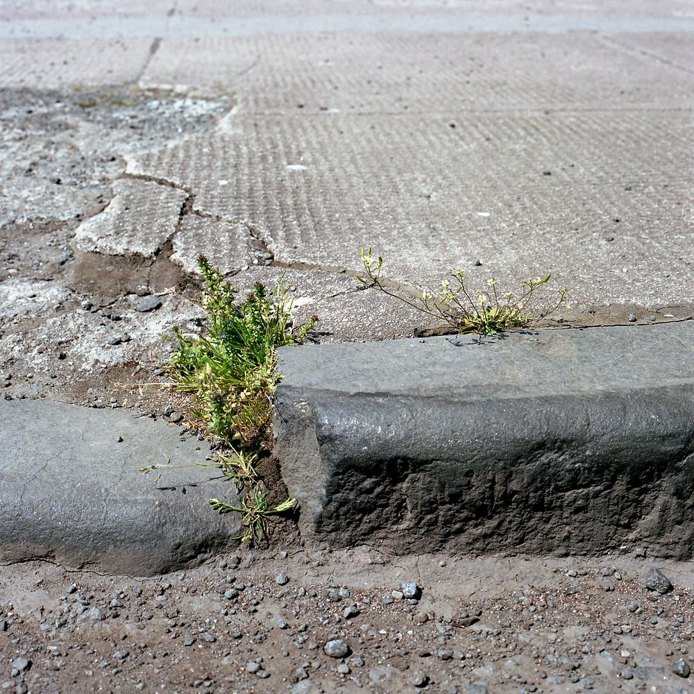 Alec Finlay Wild City grass growing in pavement crack