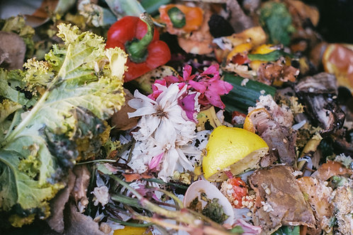 Anna Chrystal Stephens | Compost Landscape (nice rot) #1