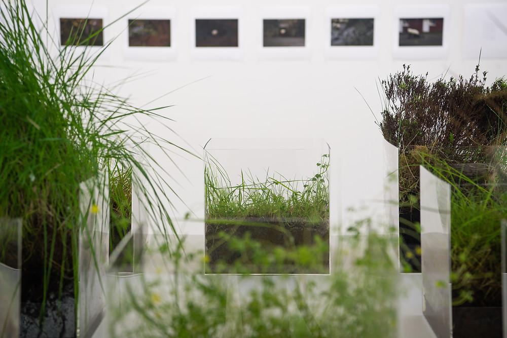 Miranda Whall Crossed Paths exhibition