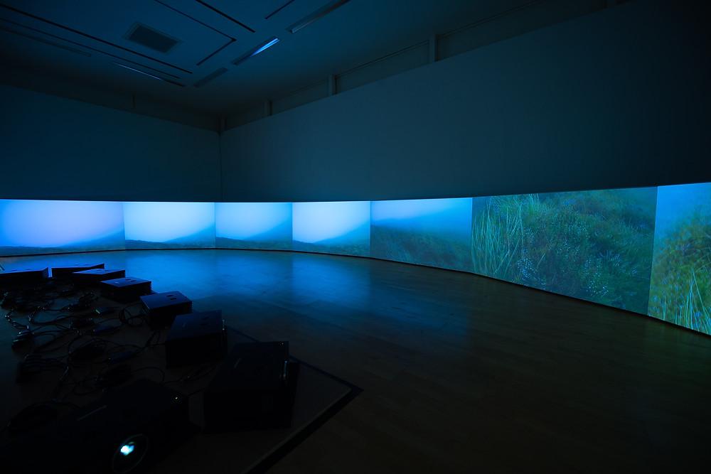 Miranda Whall's Crossed Paths exhibition