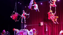 Le PeTiT CiRqUe® UPCOMING LOCAL JULY SHOWS!