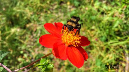 La abeja de hoy II