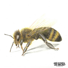 Ama the bees