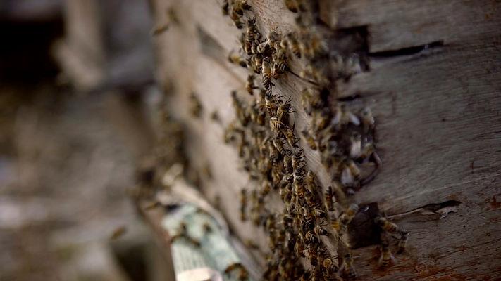 que-les-paso-a-las-abejas (33).jpg