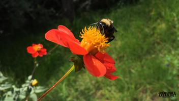 La abeja de hoy III