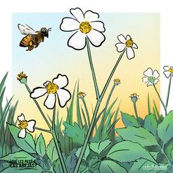 Melipona y flores silvestres