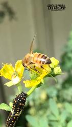Arte para las abejas