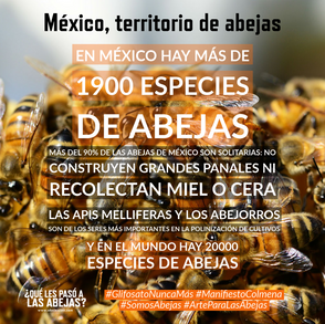 México, territorio de abejas
