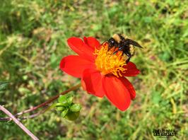 La abeja de hoy I