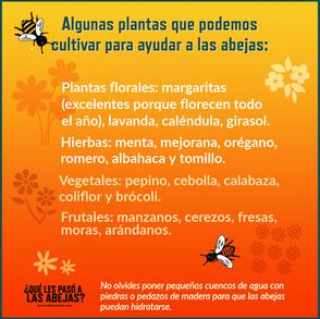 Para cuidar a las abejas