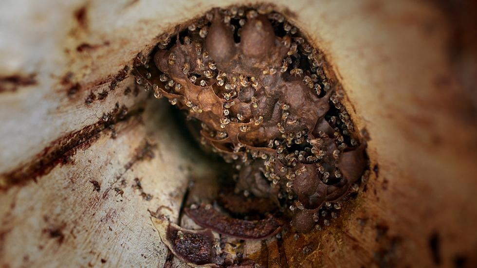 que-les-paso-a-las-abejas  (31).tif