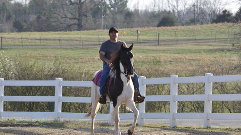Bree - Tennessee Walking Horse Mare