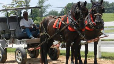 Lexi + Molly - Friesian Sporthorse Mare Team