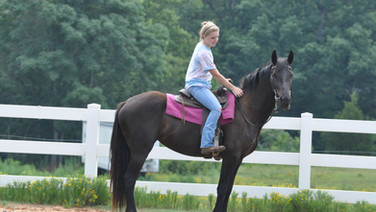 Heather - Friesian Sporthorse Mare