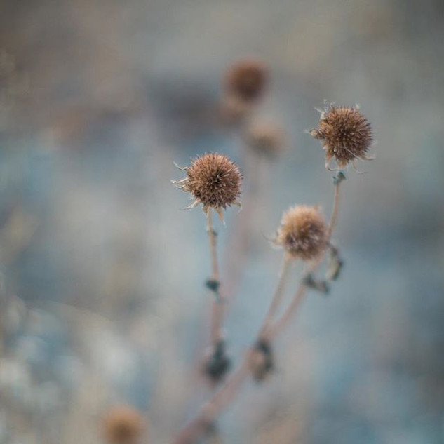 When your out shooting dont forget the details around you! #details #nature #photography #oregonweddings #weddingphotography #fineartphotogr