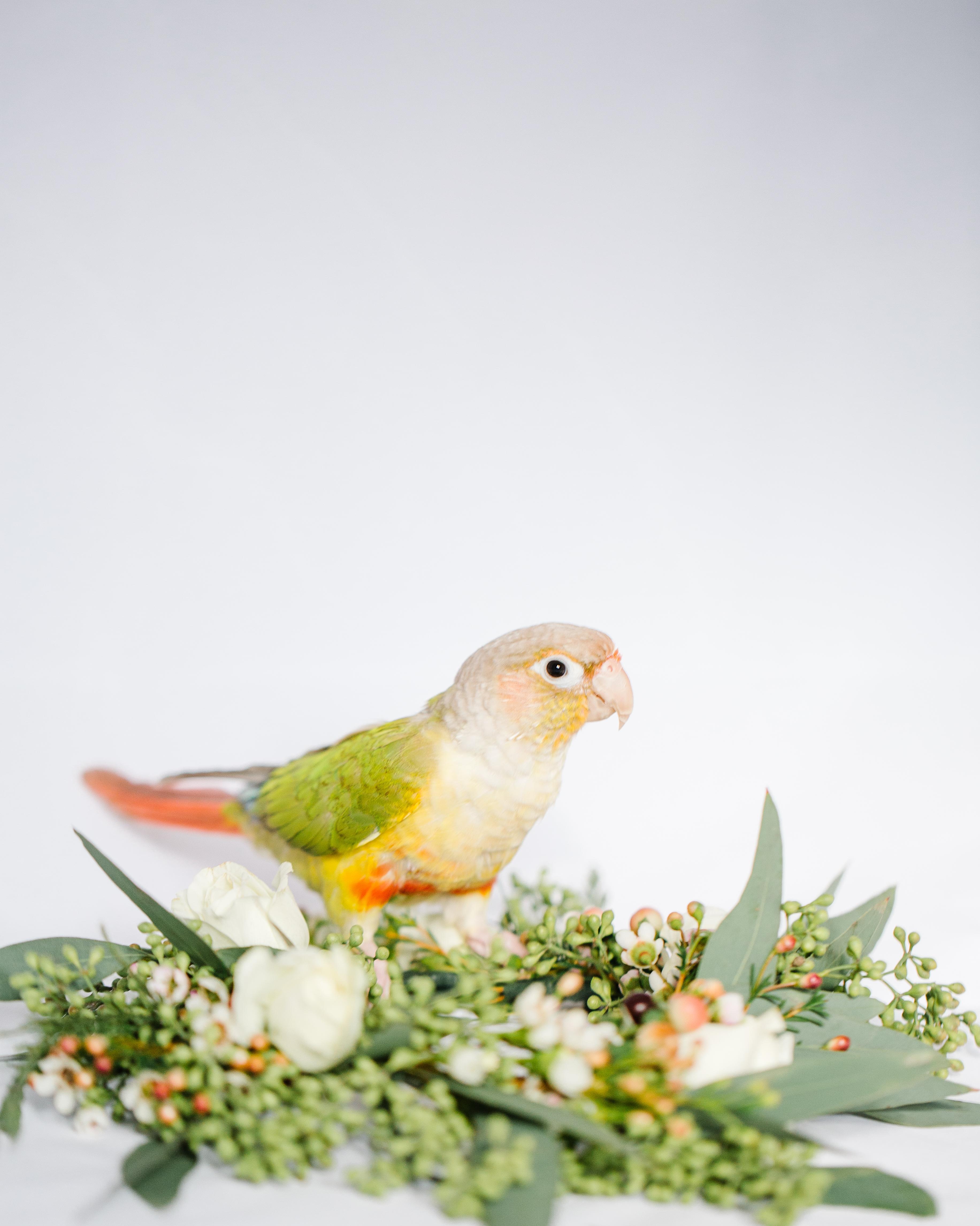 oregon wedding ideas