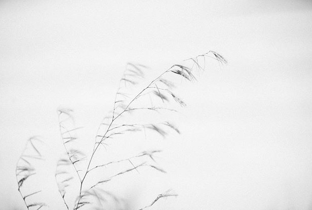 When I get a new place this will be on the wall VERY BIG, I love the subtle softness of this image and black and white is one of my favorite