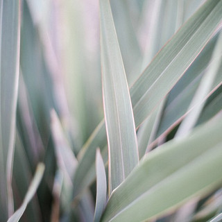 Love the subtle beauty we can find in the small natural details around is at weddings.jpg