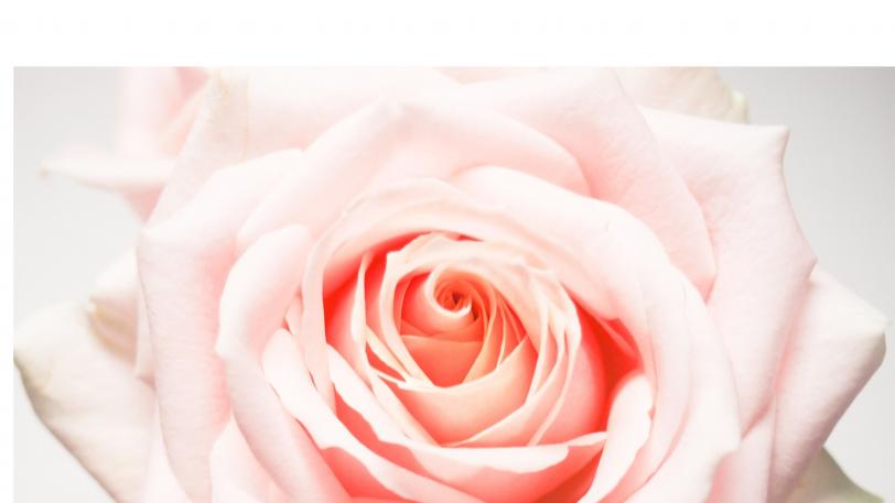 Beauty Beyond Skin Deep PDF Digital Download