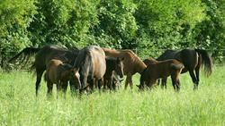 Le Haras des Pyrénées