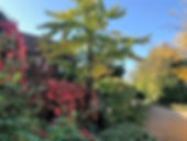 courtyard4 (2).jpg