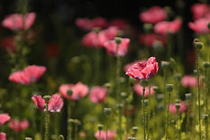 Witherdens Hall flowers.jpg