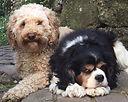 dogs (3).jpg