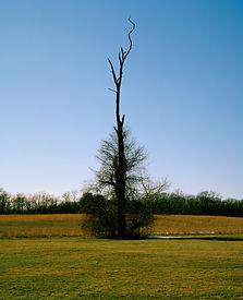 Caumsett Park Tree ,2017.jpg