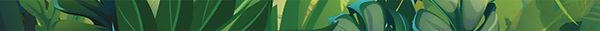 00 separador verde.jpg
