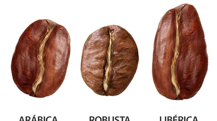 Café Geeks: La Guía Completa de las Variedades de Café