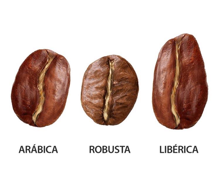 granos de café arábica robusta liberica