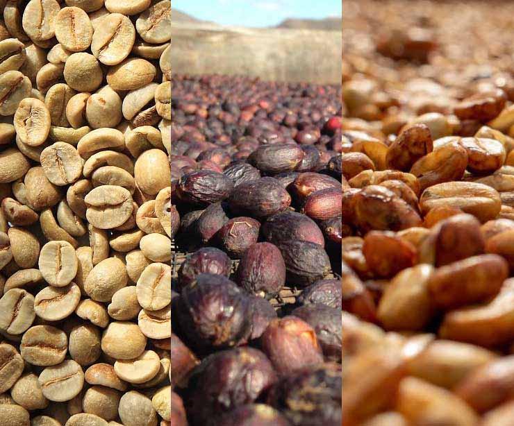 granos de cafe lavados secos honey