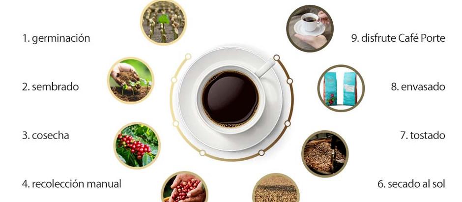 Trazabilidad del Café de Especialidad