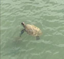 tartaruga buzios 2