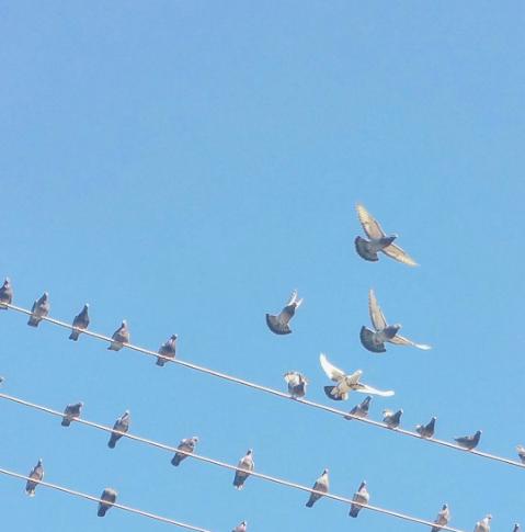 Urban Birding
