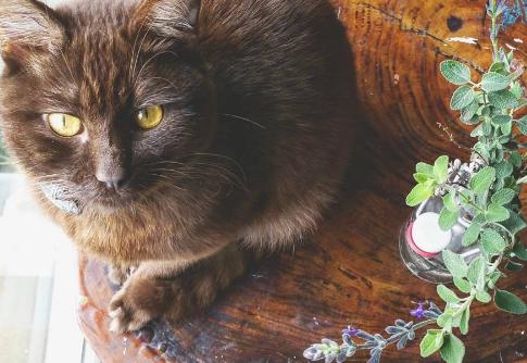 Sage & Kittens