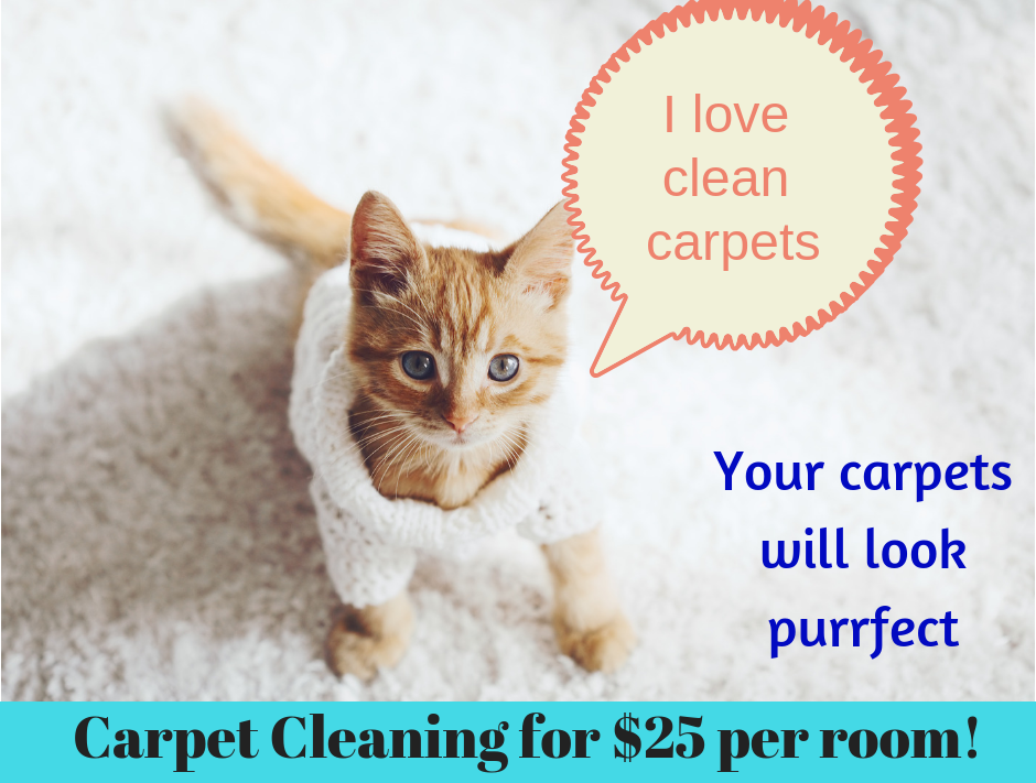 carpet cleaning with pet safe products by Valley's Best Cleaners