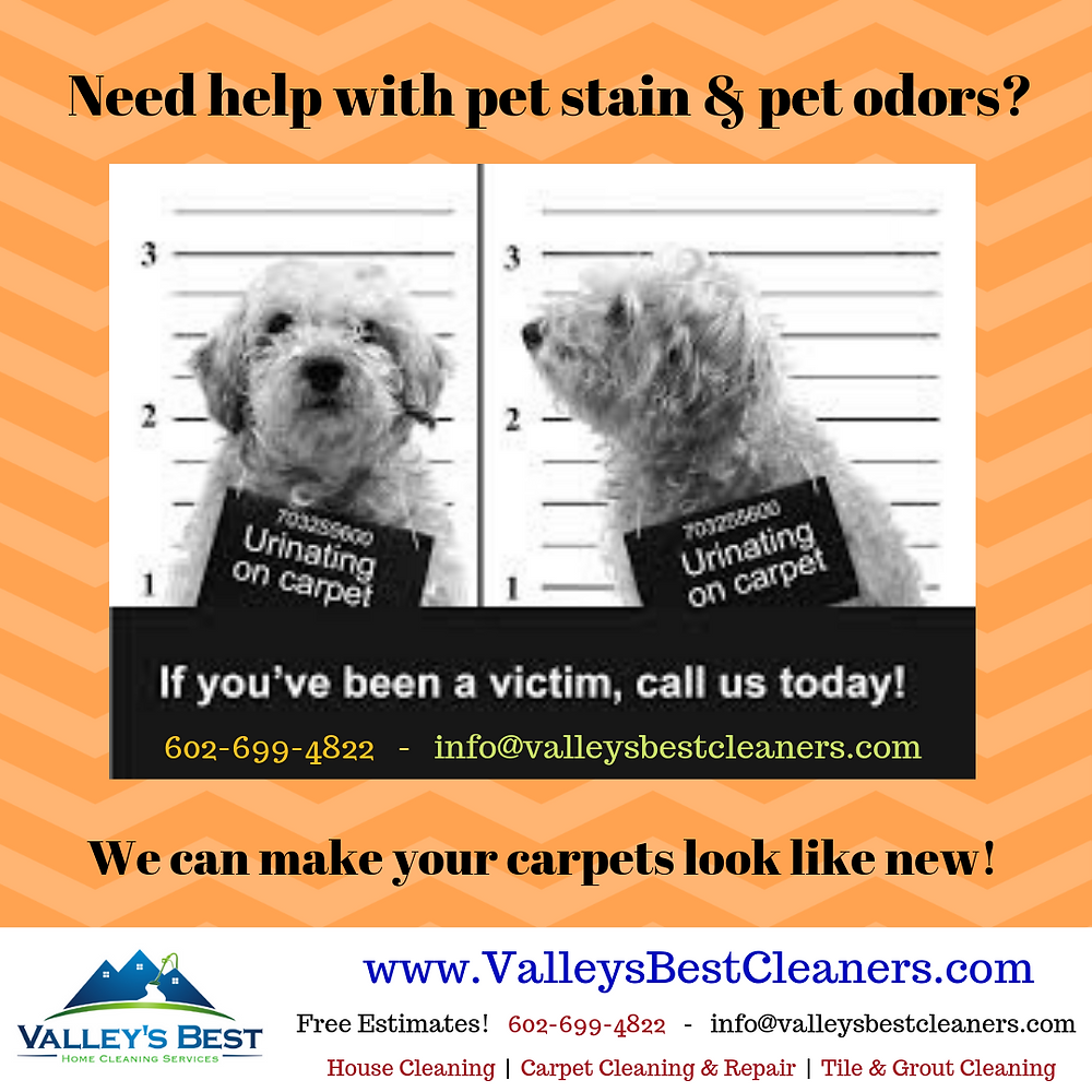 Valley's Best Cleaners specializes in pet stain removal services