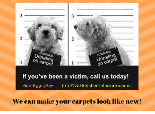 We are Pet Stain Removal Experts