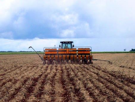 Laguna Carapã: começou o plantio da soja, mas falta de chuvas e calor forte paralisaram os trabalhos