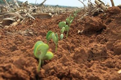 Com expectativa de safra recorde, produtores aproveitam chuva para iniciar plantio da soja em MS