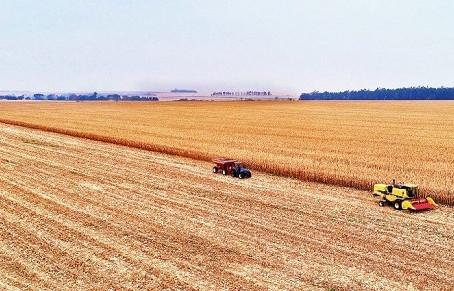 Com safra do milho atingida por geada e estiagem, produtores aceleram colheita para garantir seguro